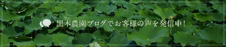 黒木農園ブログでお客様の声を発信中!
