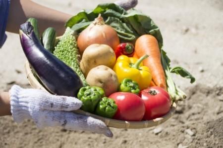 農家直送 お野菜セット (スマイル)