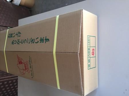 白石レンコン (しろいしれんこん 4kg 2L・L)
